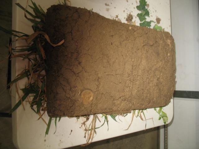 a slice of multispecies cover crop upside down