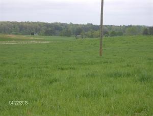 keenbell grass
