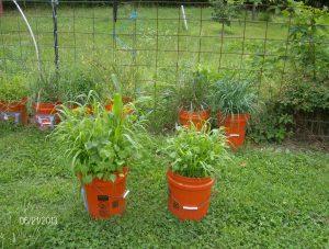 bucket cover crops