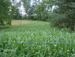 the bull field sown in two parts
