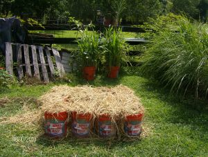 12 NEW FALL COVER CROP MIXES PLANTED FOR DISPLAY AT THE VIRGINIA STATE FAIR