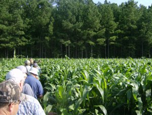 VIEWING SORGHUM
