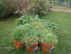 COVER CROP BUCKETS