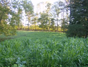fall 2013 bull pasture cover crops