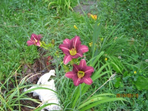 day lillies on MONTES grave
