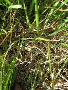 closeup of mystery grass
