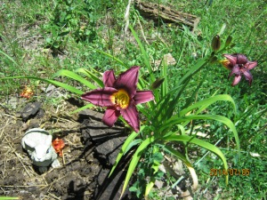 day lilly at Loreals grave