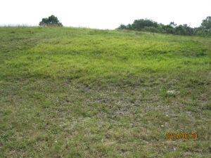 mystery grass 1