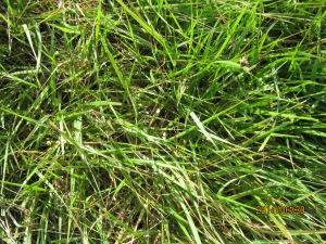 mystery grass 2