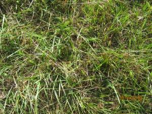 mystery grass 3