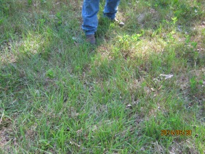 mystery grass in unimproved pasture