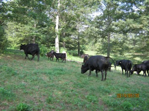 some of the tobin herd