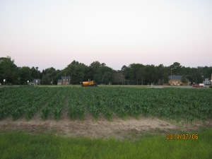 sweet corn plot