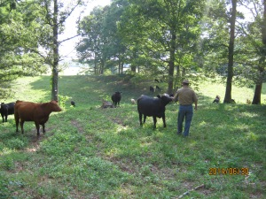 Tobin and his Cows