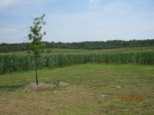 Tobin future pasture 1