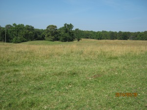 tobin pasture 1