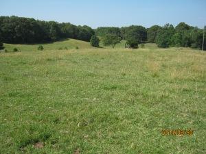 Tobin Pasture 2