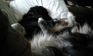 2 puppy pile