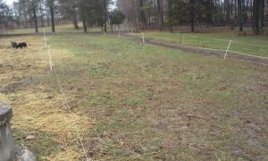5 front yard be reseeded last week