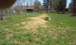 3 weeks post seeding A