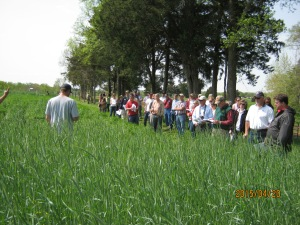 cover crop strips