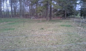 shed lot A after grazing