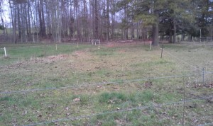 Shed lot B after grazing