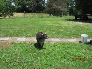 MARIES GUARD DOG