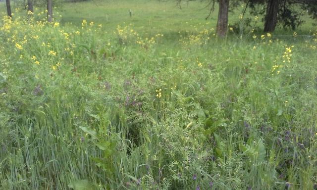 bull field paddock 5