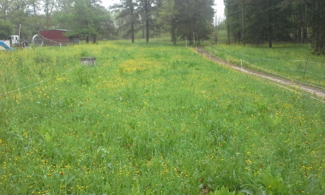 grazed, seeded mown and dragged