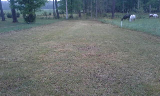 last weeks horse pasture