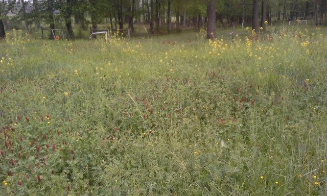 vetch and crimson clover are there too