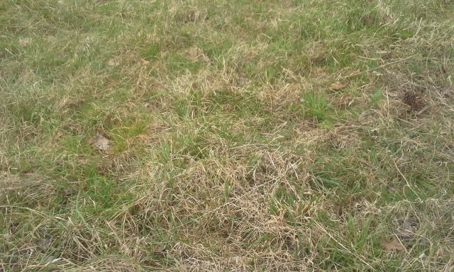 grass close